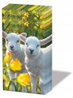Taschentücher Sweet Lambs