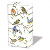 Taschentücher - Birds Meeting