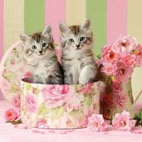 Servietten 25x25 cm - Cats in Box