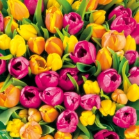Lunch Servietten Tulips