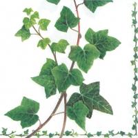 Servietten 33x33 cm - Ivy Tendril