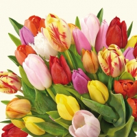 Lunch Servietten Colourful Tulips