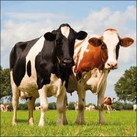 Servietten 33x33 cm - Cows