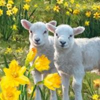 Servietten 33x33 cm - Sweet Lambs