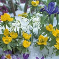 Lunch Servietten Flowers In Snow