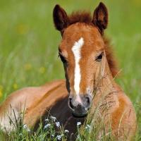 Servietten 33x33 cm - Foal