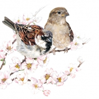 Servietten 33x33 cm - Sparrows Blossom