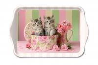 Tablett - Katzen in der Box
