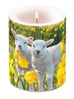 Kerze Candle Big Sweet Lambs