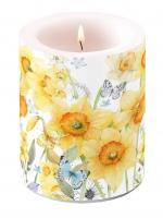 Dekorkerze - Classic Daffodils