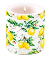 Dekorkerze Citrus