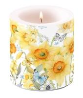 Dekorkerze klein - Classic Daffodils