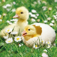 Servietten 33x33 cm - Newborn Chicks