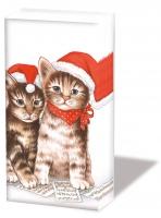 Taschentücher - Singende Katzen