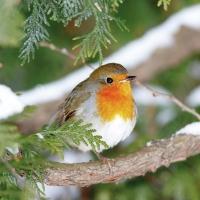 Servietten 25x25 cm - Robin In Tree