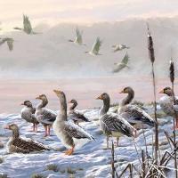Servietten 33x33 cm - Winter River Geese