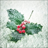 Servietten 33x33 cm - Frozen Ilex