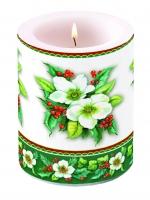 Kerze Helleborus