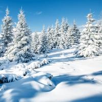 Servietten 33x33 cm - Winterlandschaft