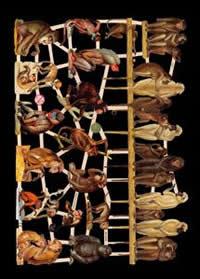 Glanzbilder - Affen