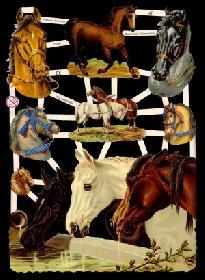 Glanzbilder - Pferde an der Tränke