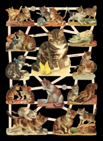 Glanzbilder Katzen