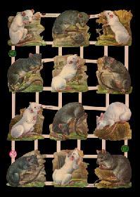 Glanzbilder Ratten