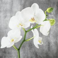 Servietten 25x25 cm - White Orchid