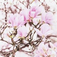 Servietten 25x25 cm - Pink Magnolia