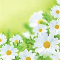 Servietten 33x33 cm - White Daisies