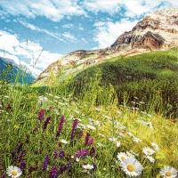 Servietten 33x33 cm - Mountain Scenery
