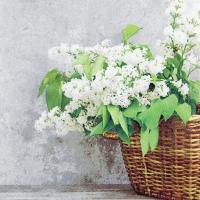 Servietten 33x33 cm - Lilac Blossoms