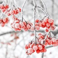 Servietten 25x25 cm - Iced Berries