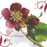 Servietten 33x33 cm - Weihnachtsrose