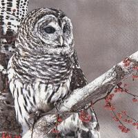 Servietten 33x33 cm - Snow Owl