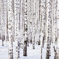 Servietten 33x33 cm - Winter Biches
