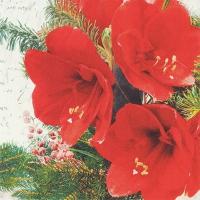 Servietten 33x33 cm - Red Amaryllis