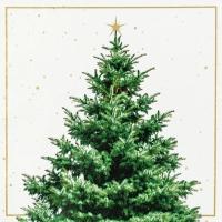 Servietten 33x33 cm - Fir Tree