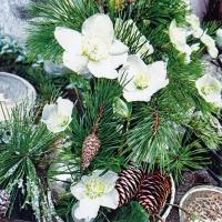 Servietten 33x33 cm - Winter Rose