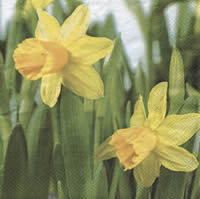Servietten 33x33 cm - Daffodil