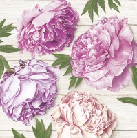 Servietten 33x33 cm - Romantic Peonies on White Wood