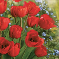 Servietten 33x33 cm - Bunch of Red Tulips