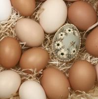Servietten 33x33 cm - Organic Eggs
