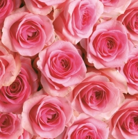 Servietten 33x33 cm - Pink Roses Background
