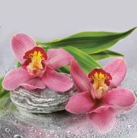 Servietten 33x33 cm - Orchids on Stone