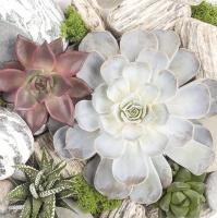 Servietten 33x33 cm - Sukkulente Pflanzen und Steinzusammensetzung