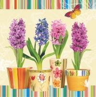 Lunch Servietten three cup with hyacinths