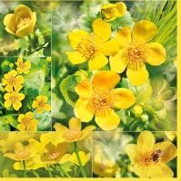 Servietten 33x33 cm - Marsh Marigold Flowers