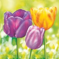 Servietten 33x33 cm - Drei Garten-Tulpen