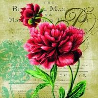 Servietten 33x33 cm - Red Rose